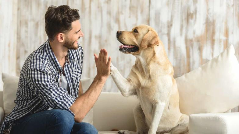 Do not do these things in front of your dog