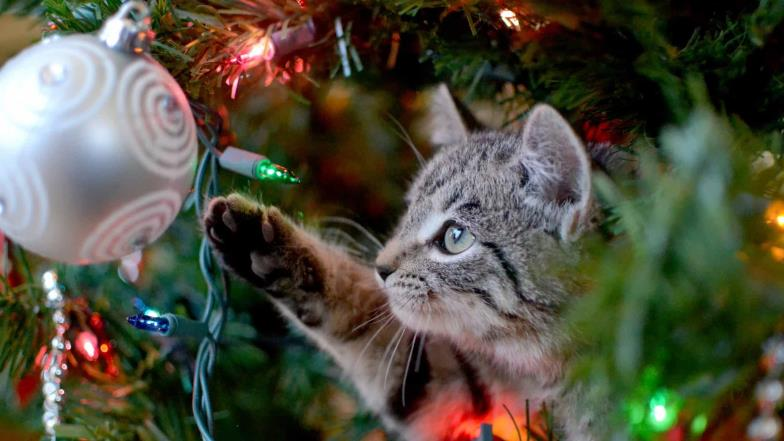 5 tips to make your Christmas tree cat-proof