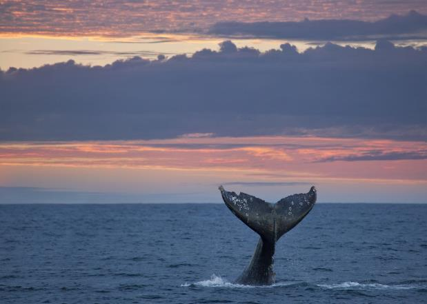 Here you can spot gray whales along the Pacific coast during the migrating season