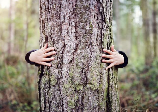 Solution to loneliness in Iceland: hug a tree!