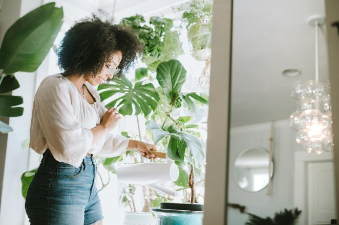 You keep your house plants healthy through these hacks